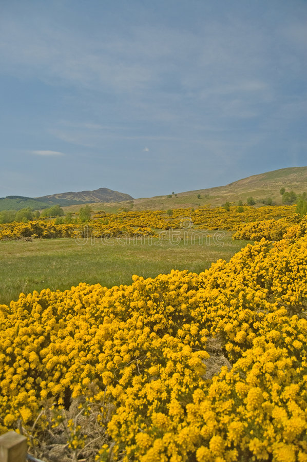 Download Yellow of the hills stock photo. Image of hills, europe - 9018060