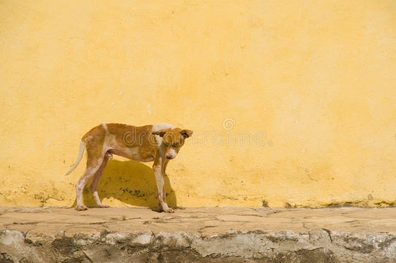 Download Yellow Hot Dog stock image. Image of horizontal, hound - 18514441