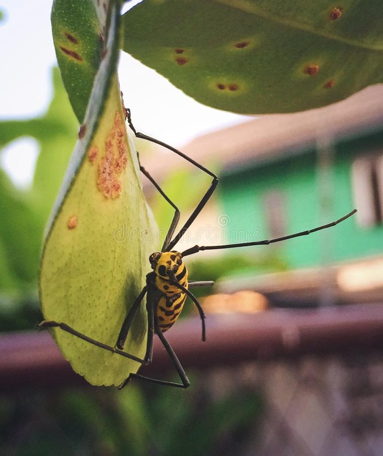 Yellow Insect stock photography