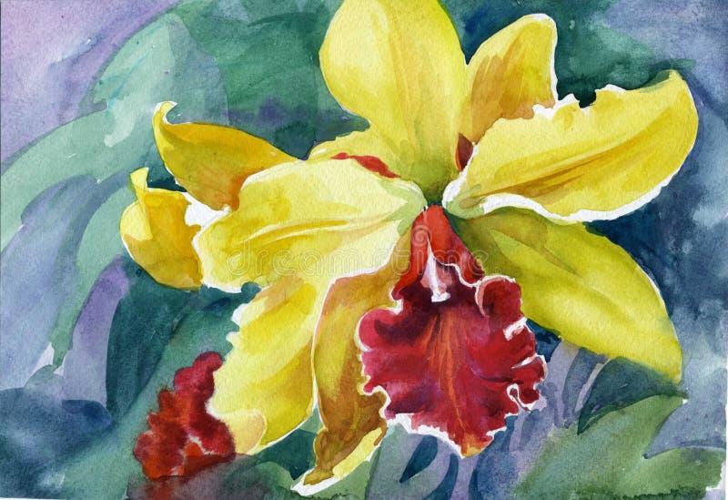 Yellow iris. Beautiful, beauty in nature royalty free illustration
