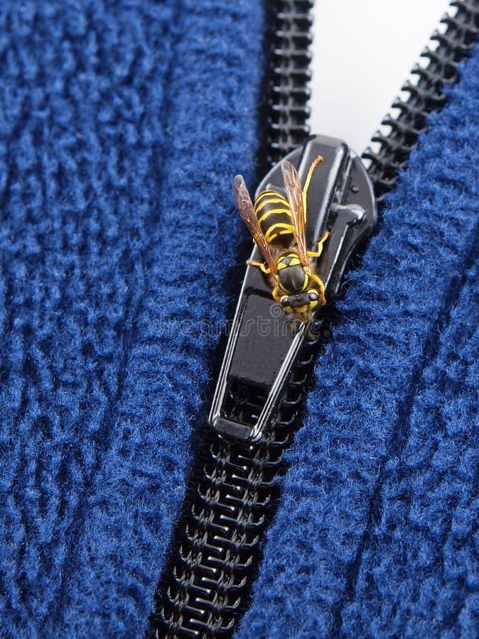 Download Yellow Jacket on Zipper stock photo. Image of designer - 10992202