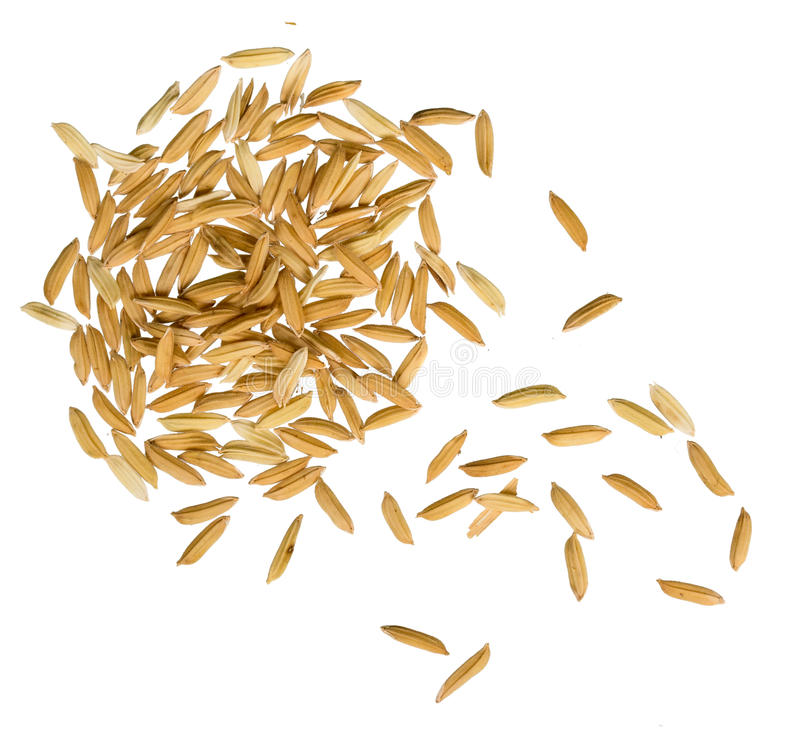Yellow jasmin ripe rice. On white stock photography