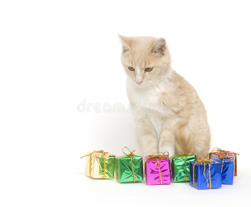 Yellow kitten and presents stock image