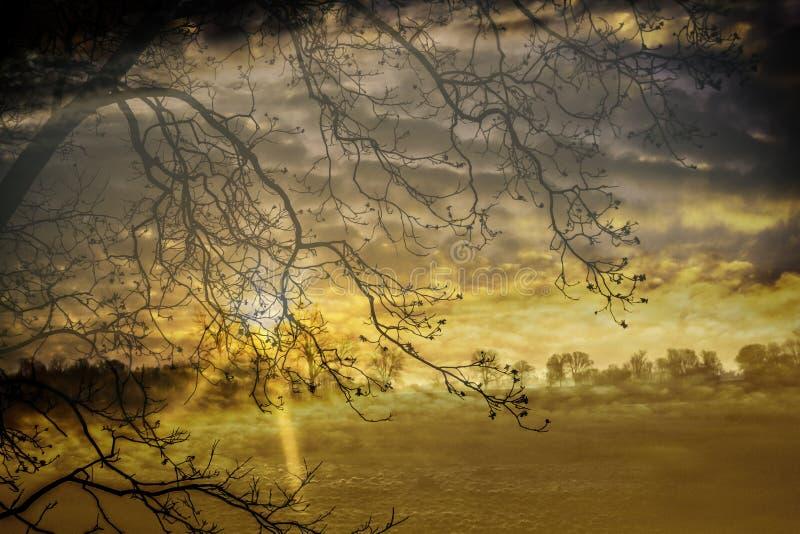 Yellow landscape royalty free stock photo