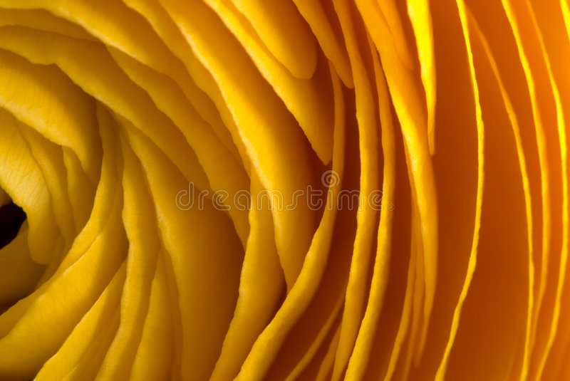 Yellow layers stock photo