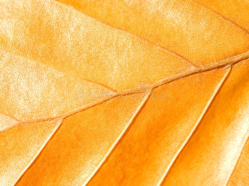 Yellow leaf. royalty free stock photo