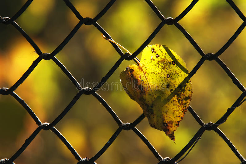 Download Yellow leaf stock image. Image of park, grid, green, leaf - 18763603