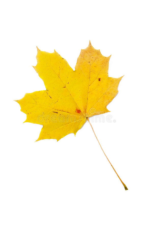 Download Yellow leaf stock image. Image of foliage, yellow, autumn - 7077369