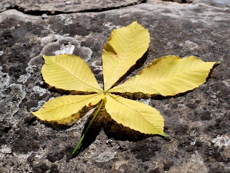 Yellow leaf royalty free stock photography
