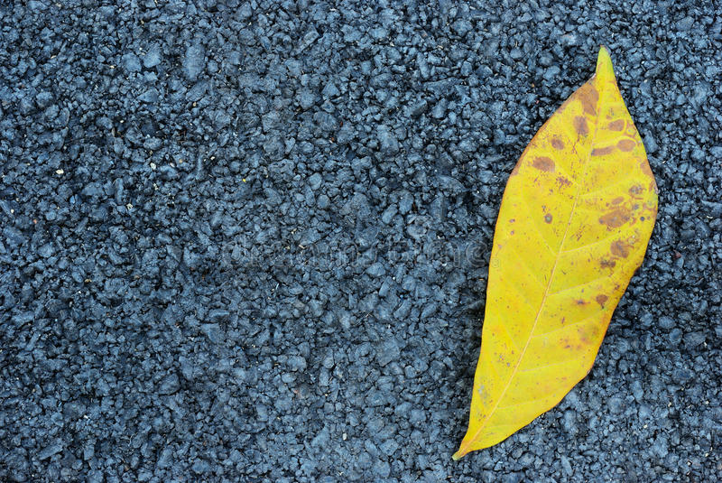 Asphalt texture with yellow leaf. The yellow leaf with asphalt texture background stock image