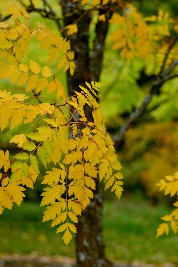 Yellow, Leaf, Autumn, Tree royalty free stock photos