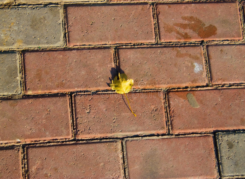 Yellow leaf on dirty pavement