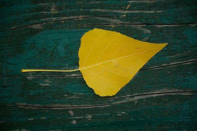 Yellow leaf fallen on a wooden bench in the park stock photo
