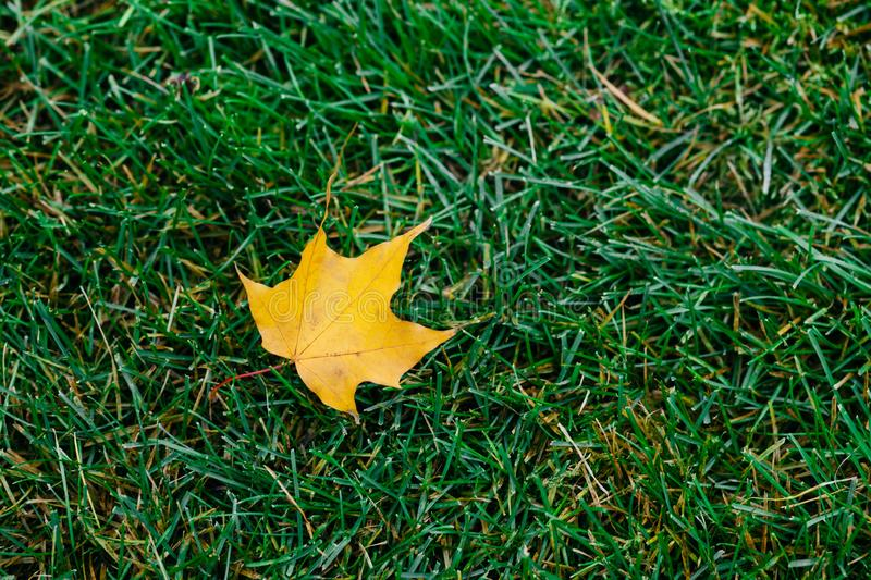 Yellow leaf fell from tree on green grass. Autumn foliage. Bright colors. Nature. Copy space. Outdoor horizontal shot. Season conc royalty free stock photography
