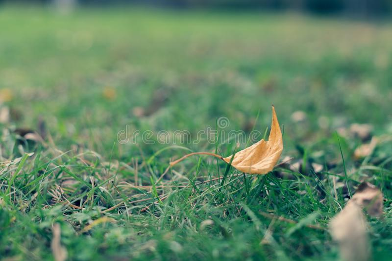 Yellow leaf on green grass. royalty free stock photos