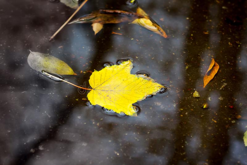 Yellow leaf in the puddle. Reflection in the water of trees. Rainy autumn day_ royalty free stock images