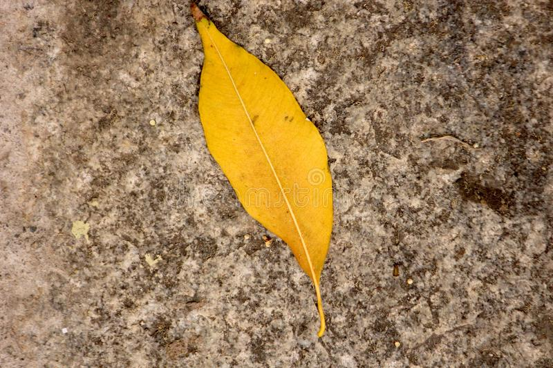 Yellow Leaf. On rock royalty free stock images