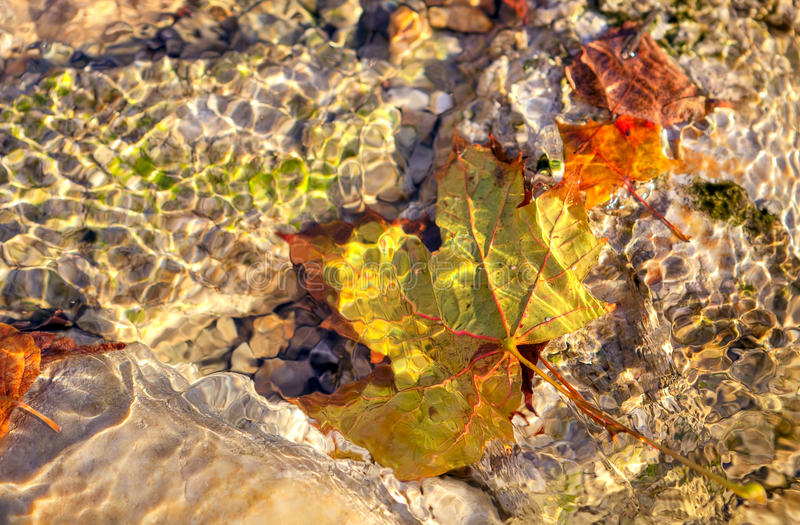 Yellow Leaf Under The Water. Royalty Free Stock Photography