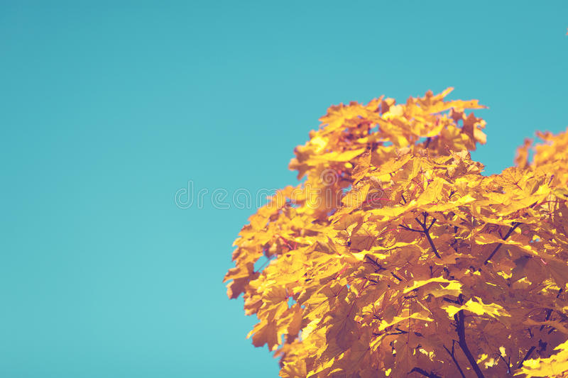 Yellow Leave Tree Under Blue Sky During Daytime Free Public Domain Cc0 Image