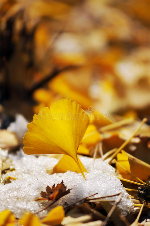 Download Yellow Leaves stock photo. Image of memory, beauty, orange - 12117624