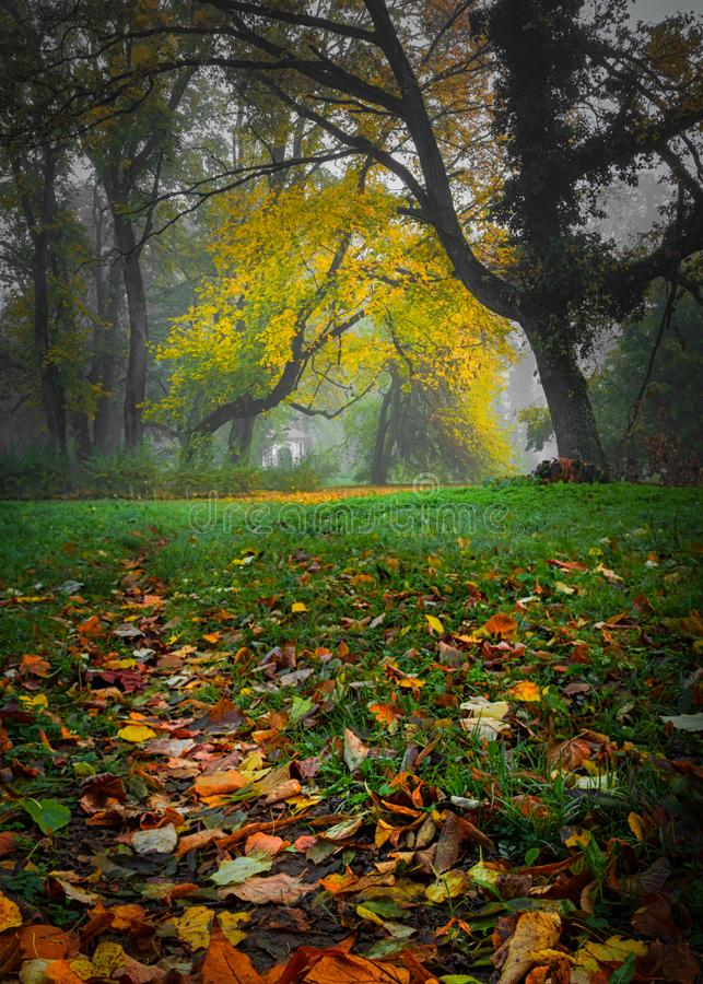 Yellow leaves on branch on cold autumn morning stock image