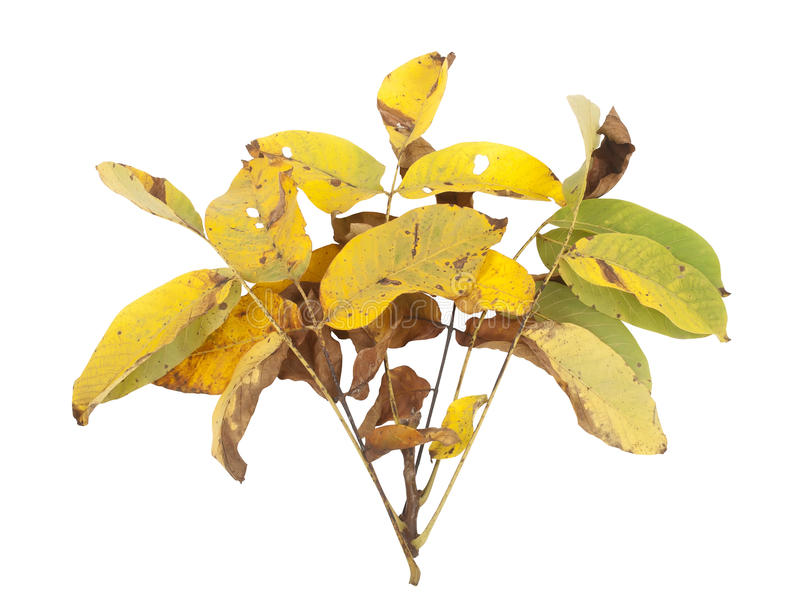 Download Yellow leaves stock image. Image of october, environment - 34760505
