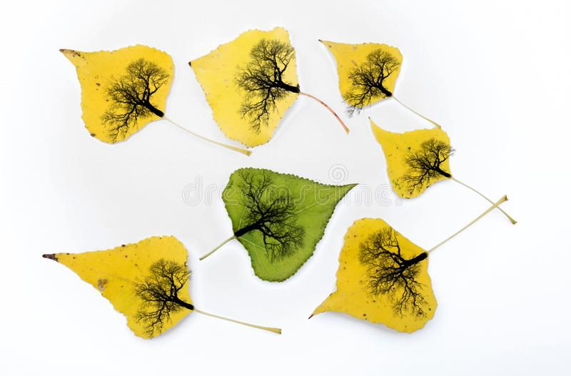 Yellow leaves fallen from trees. Trees are drawn on the leaves. A conceptual and interesting image about autumn.  stock image
