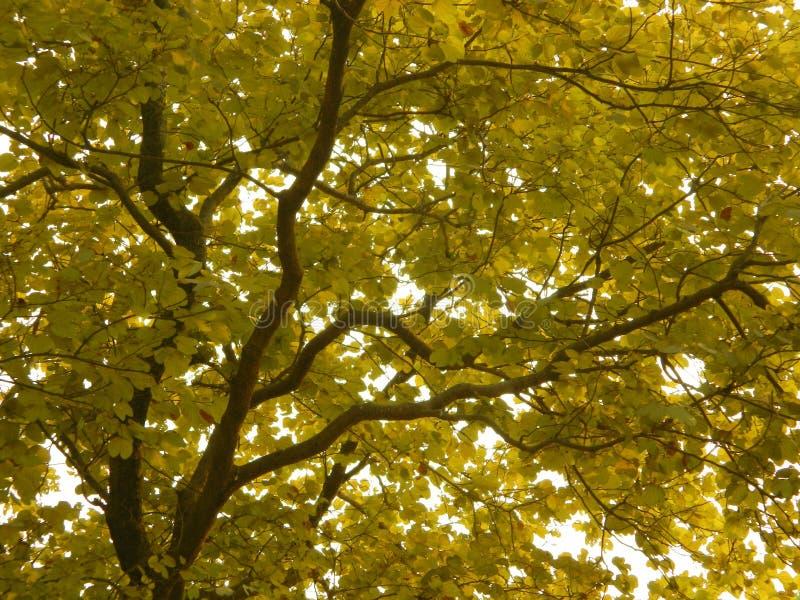 Yellow leaves stock photo