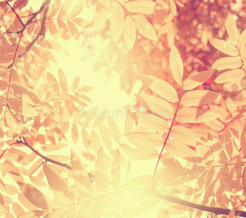 Bright autumnal background royalty free stock image