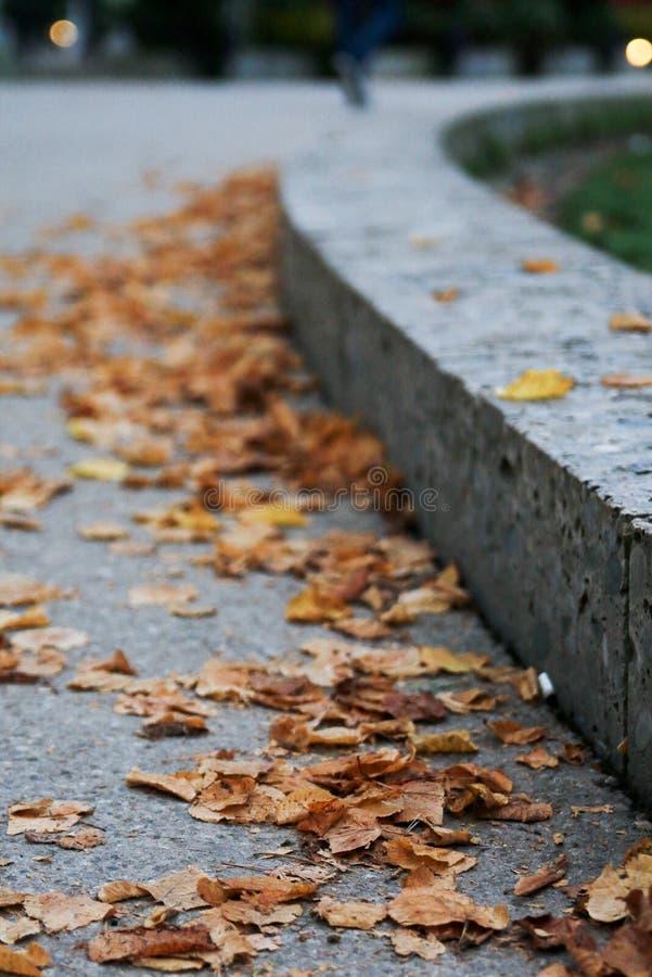 Yellow leaves stock photos