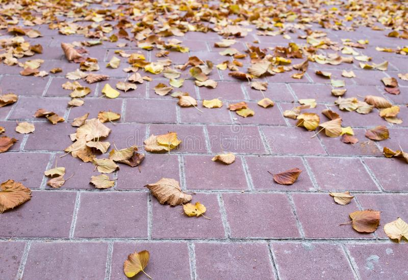 Yellow leaves on the stone tiles. Photo can be used as a whole background royalty free stock photo