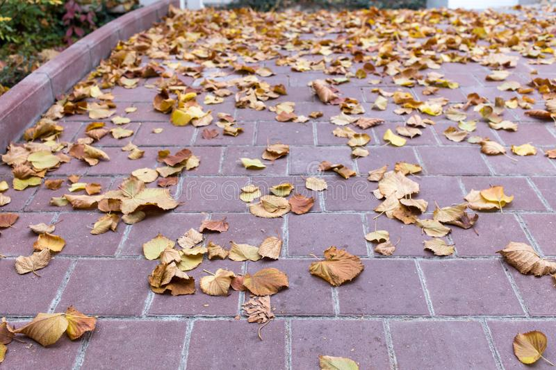 Yellow leaves on the stone tiles. Photo can be used as a whole background royalty free stock photos