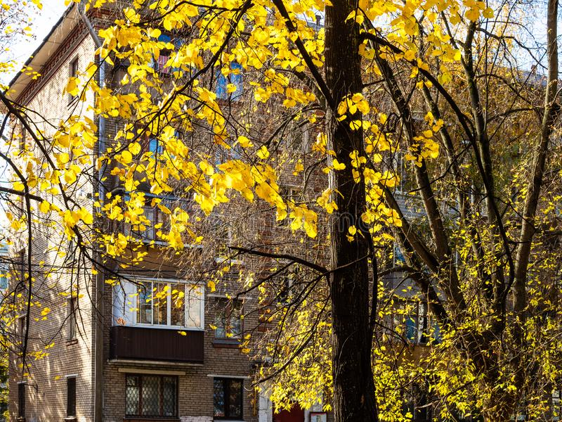 Yellow leaves of tree lit by sun and urban house. Yellow leaves of linden tree lit by sun and urban house on background in Moscow city in sunny autumn day royalty free stock images