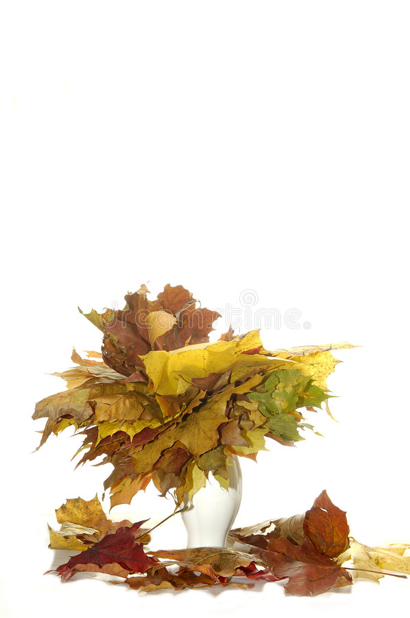 Yellow leaves in vase royalty free stock image