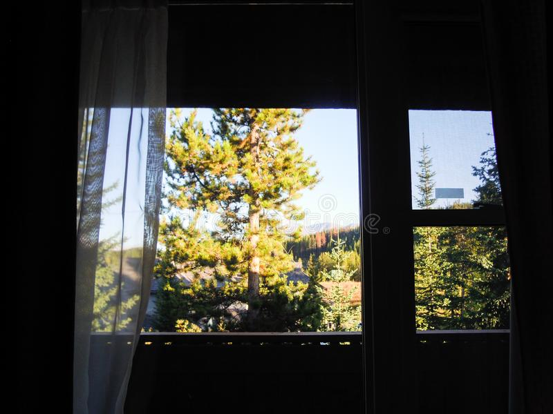 Yellow Leaves from Window of Hotel in Lake Louise Village, Canadian Rockies. Alberta,Canada royalty free stock photography