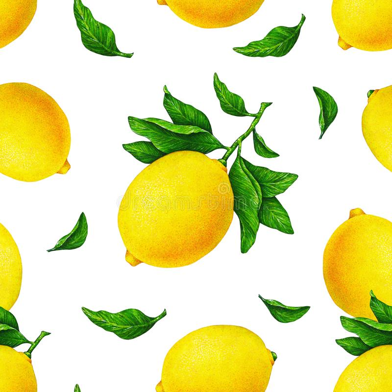 Yellow lemon fruits on a branch with green leaves isolated on white background. Water color drawing seamless pattern for design. vector illustration
