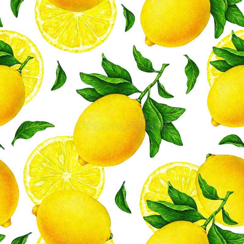 Yellow lemon fruits on a branch with green leaves on white background. Watercolor drawing seamless pattern for design. stock illustration