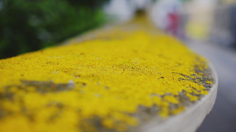 Yellow lichen macro. Closeup, yellow texture royalty free stock image