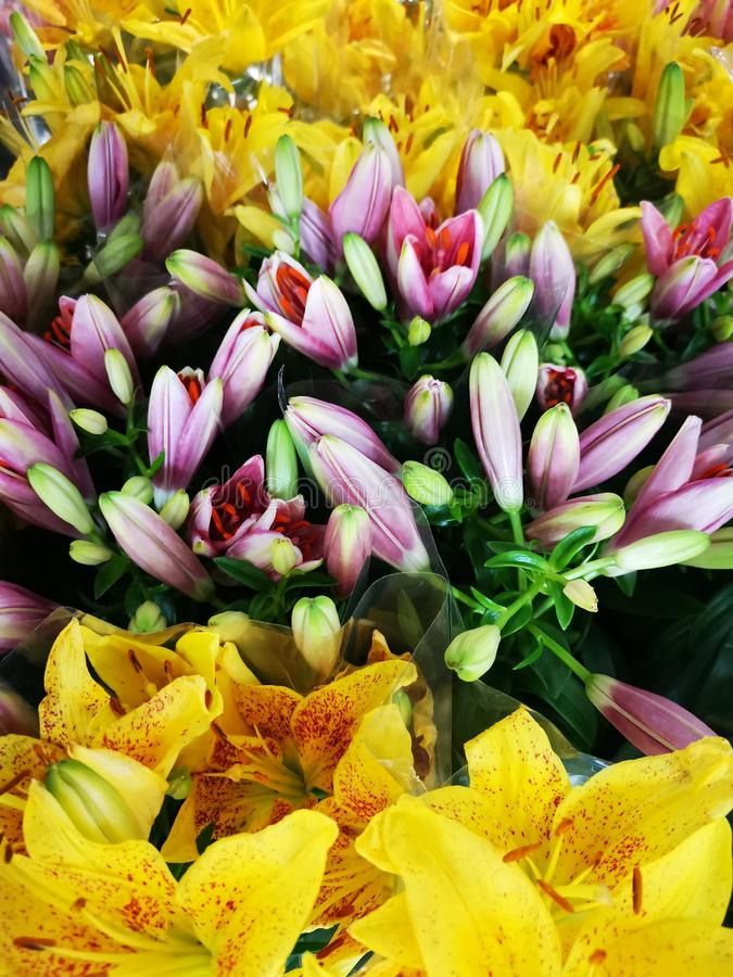 Yellow lilies and pink in the middle stock image
