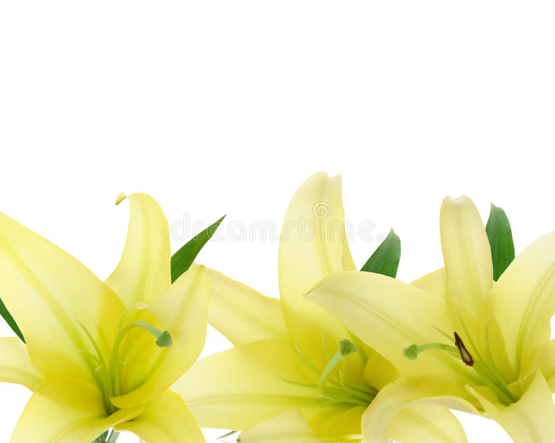 Download Yellow Lily stock photo. Image of pair, flower, border - 2618330