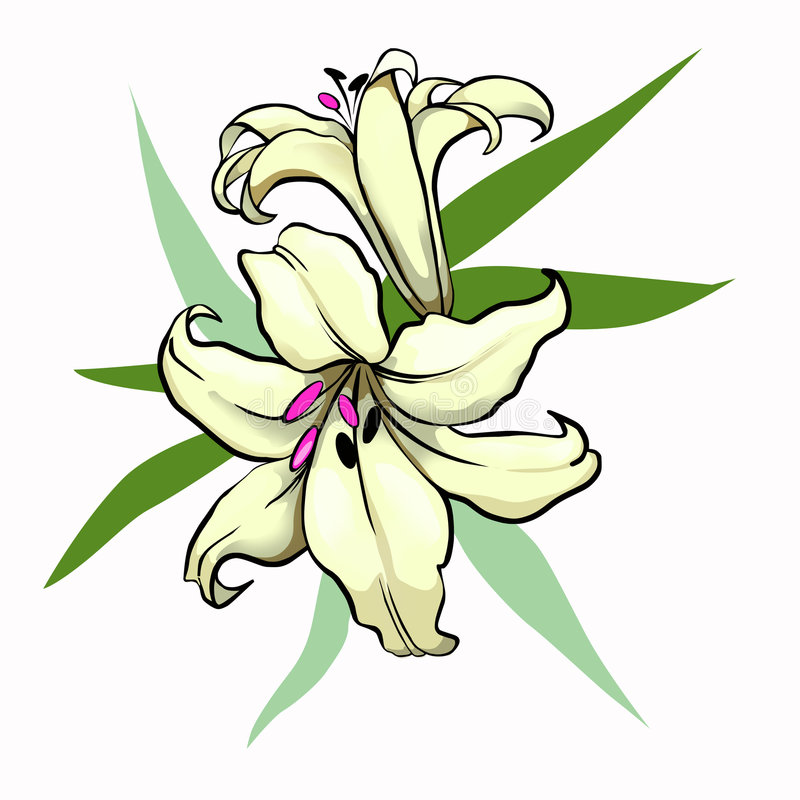Yellow lily stock illustration