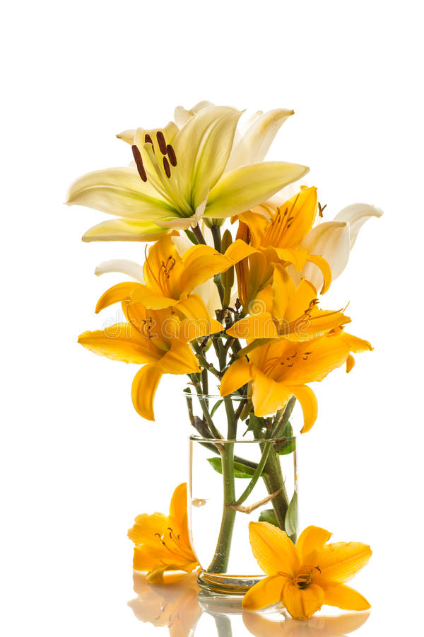 Yellow lily. Beautiful yellow lilies on a white background stock photos