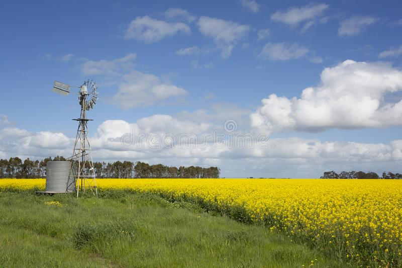 Aussie Water Tank and Wind Mill. A yellow line of canola flowers leads to a typical Australian wind mill and water tank stock photo