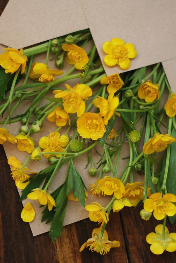 Yellow Little Flowers in Envelope Rustic Wooden Background Banner Flat Lay. Yellow Little Flowers in Envelope Rustic Wooden Background Banner royalty free stock photography