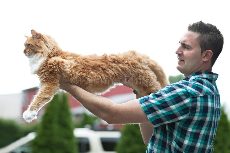 Yellow Maine Coon Cat. Man holding his cherished purebred Maine Coon cat outright to show his size. Shallow depth of field royalty free stock photos