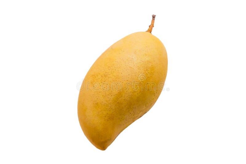 Yellow mango fruit on a white background.  royalty free stock image