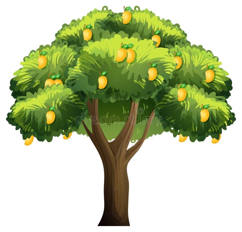 Free Yellow Mango Tree Isolated On White Background Royalty Free Stock Images - 214352379