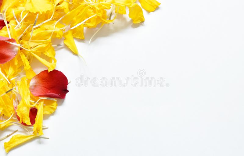 Yellow marigold and red rose petal arranging on white paper background stock photography