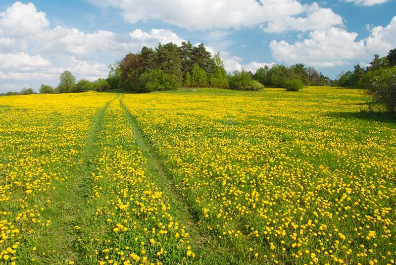 Download Yellow meadow stock image. Image of blooming, bent, blow - 22639927