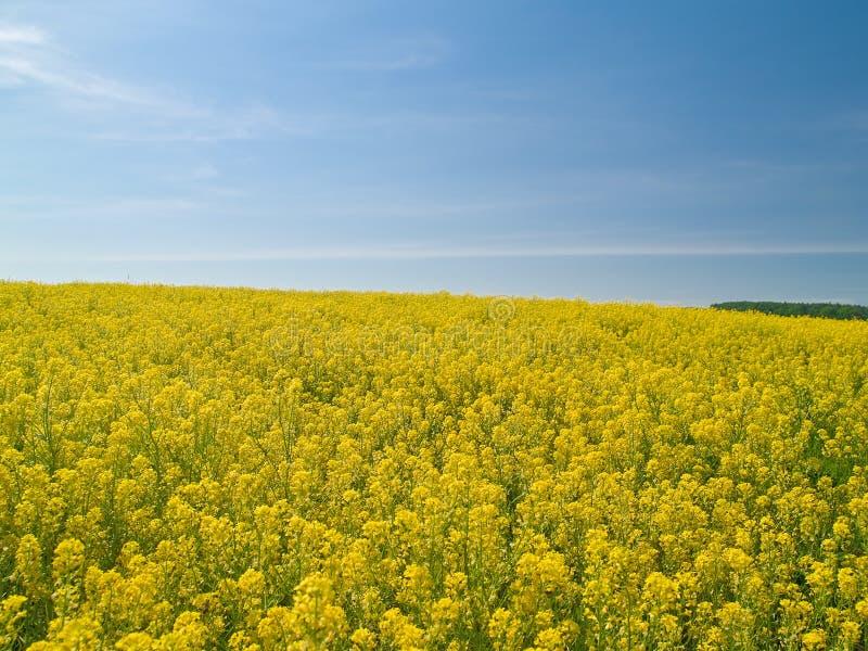Yellow meadow stock image